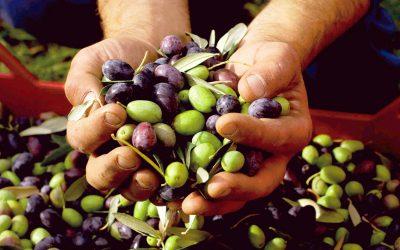 Conoce el estado del olivo por su Savia